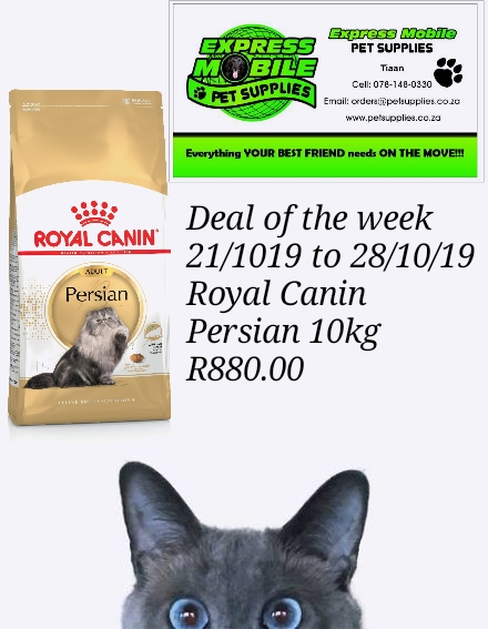 persian-10kg-deal-of-the-week