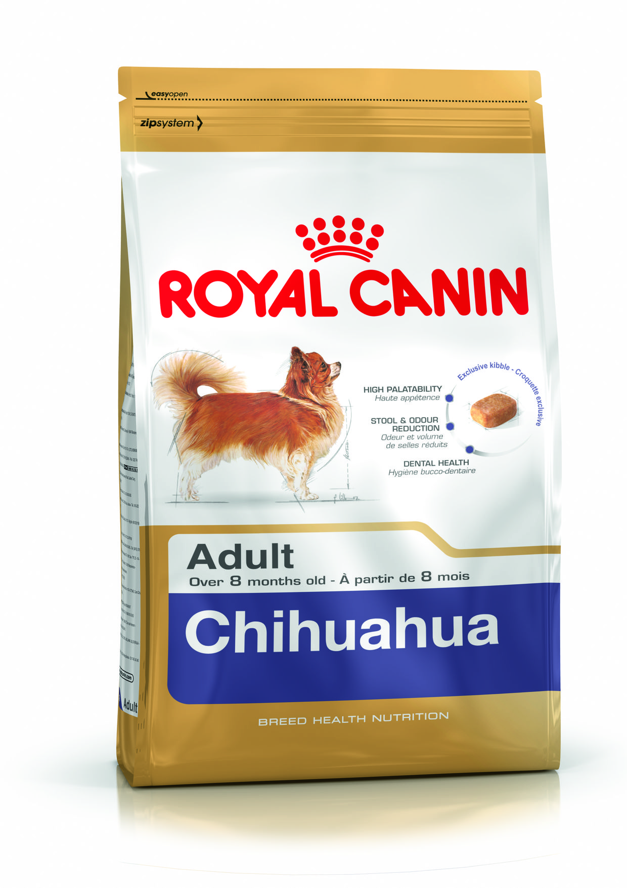 chihuahua-adult
