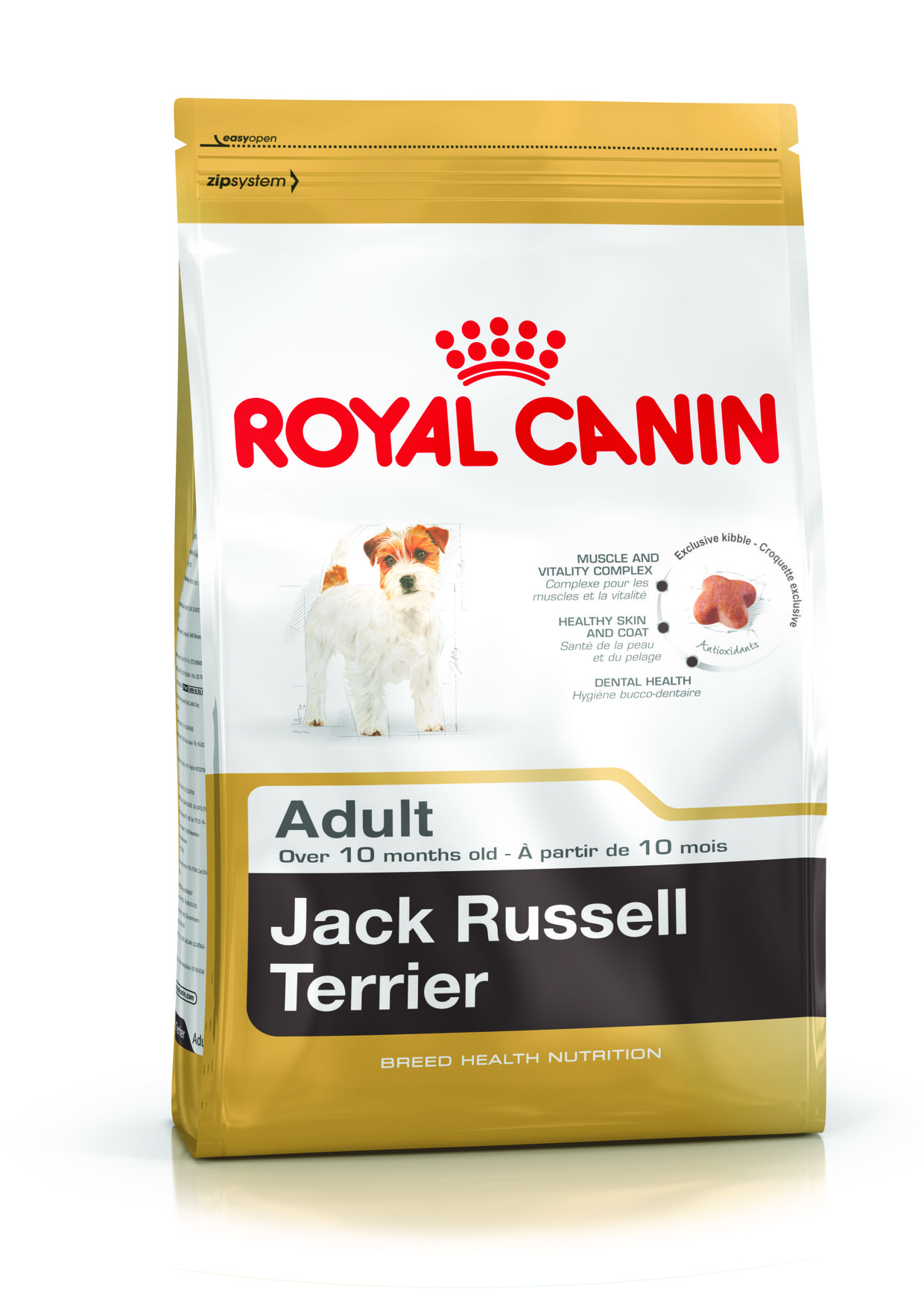 jack-russell-terrier-adult