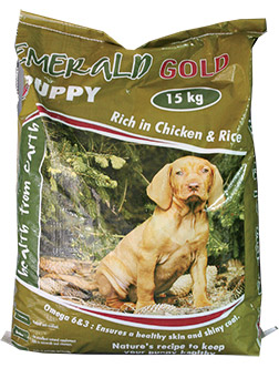 emerald-gold-puppy