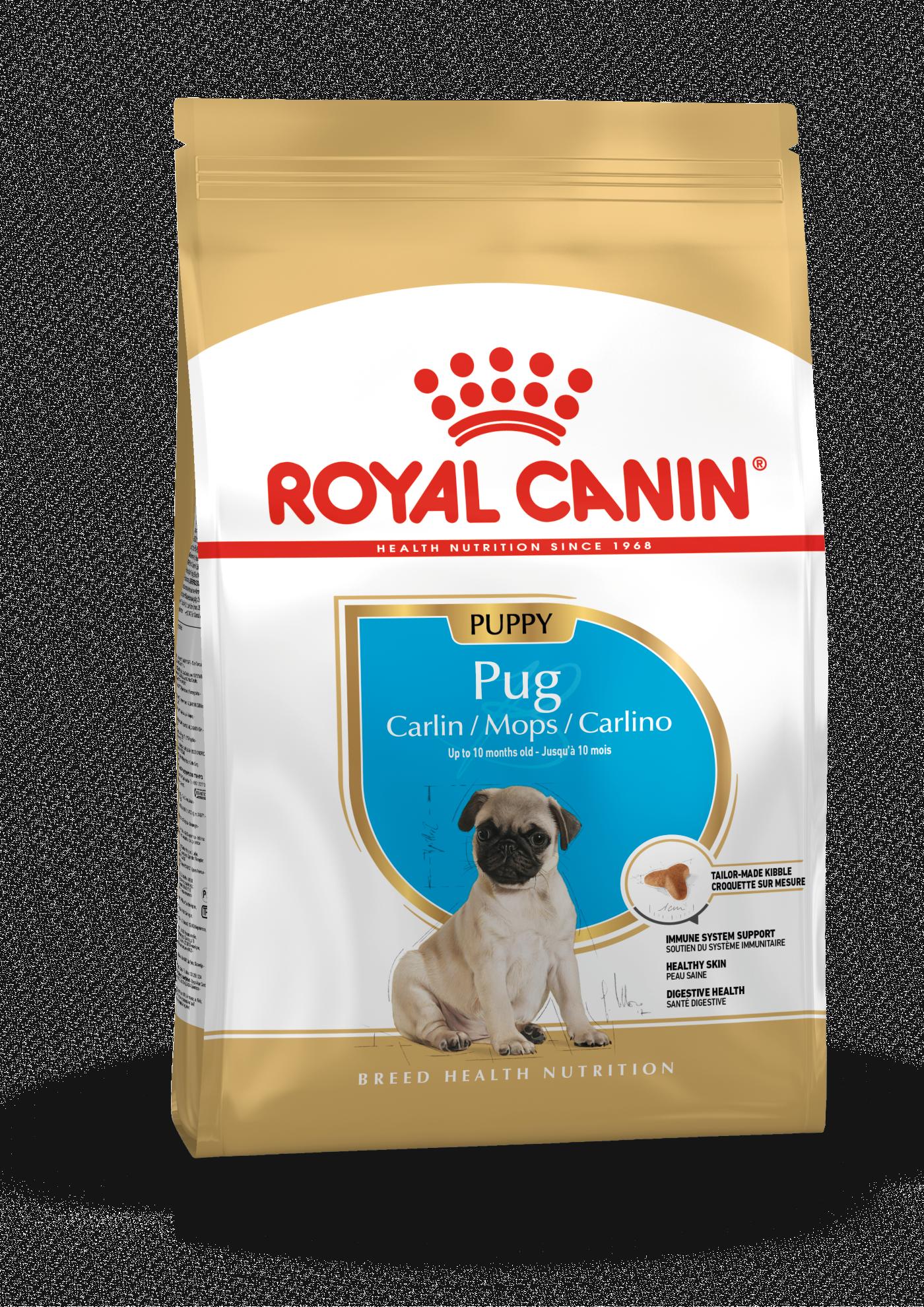 rc-pug-puppy-15kg