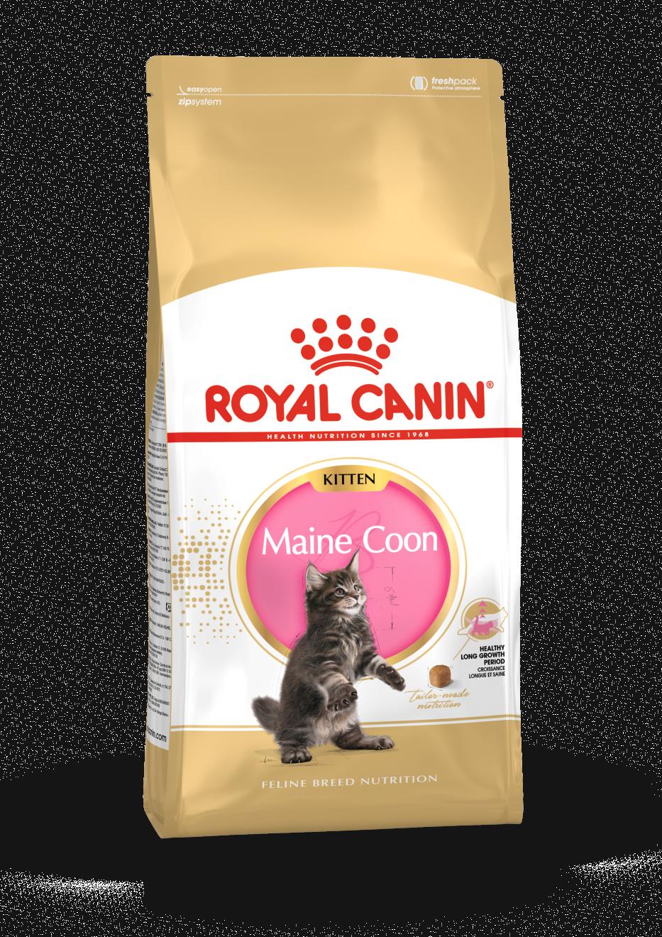 rc-maine-coon-kitten-4kg