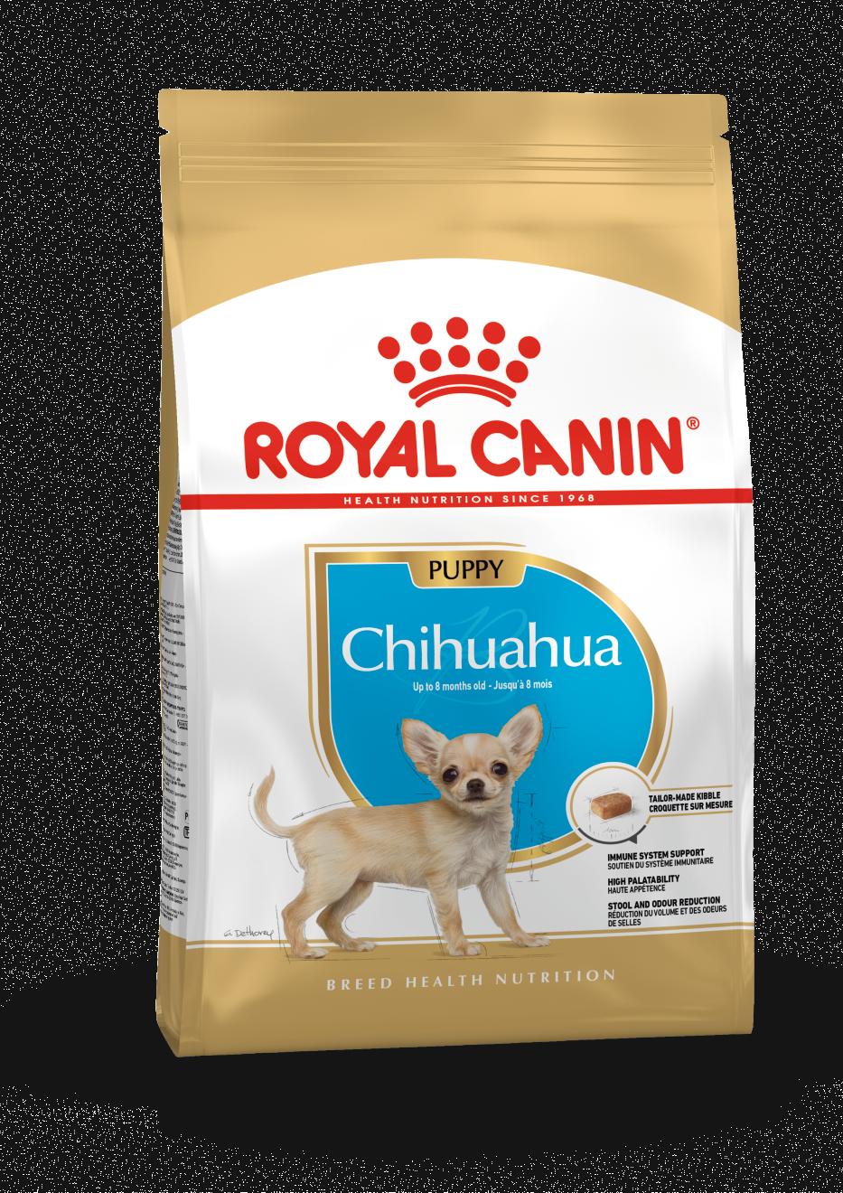 rc-chihuahua-puppy-15kg